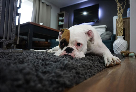 Cute Ideas To Make Your Premium Home More Pet-Friendly