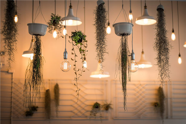 Hanging Plants for Home Decoration